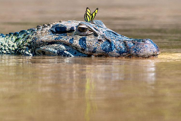 Amazon in Peru manu national park