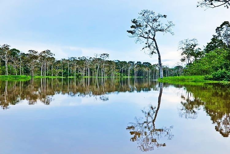 Amazon in Peru pacaya samiria