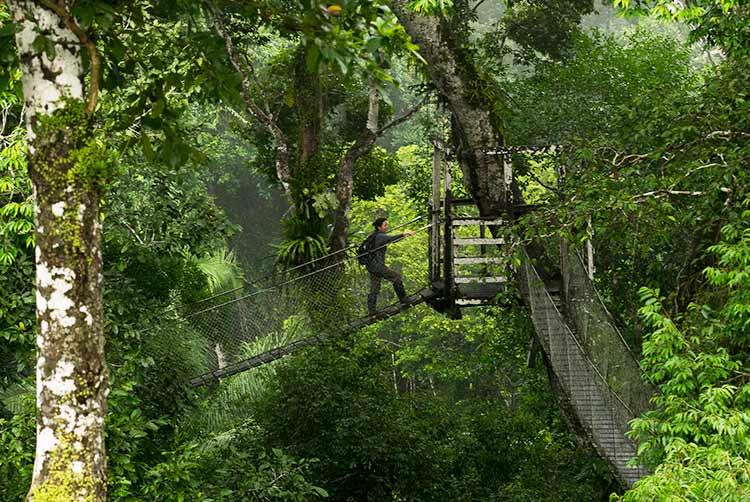 romantic ideas Peruvian Amazon