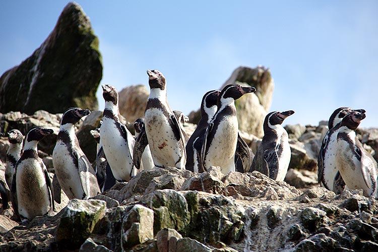 paracas national reserve guide for travel